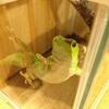 吉祥寺の爬虫類カフェ「はちゅカフェ」さんは店員さんの愛を感じる素敵なお店でした!