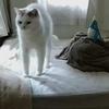 キャパ超えた…!そんな時にもお勧めの猫様がなんだかおかしい写真をご紹介