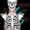 綺麗な首に胸鎖乳突筋!鍛える方法とストレッチ:胸鎖乳突筋の特徴について