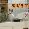 あずきのあずきによる自己紹介!!!