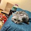 飼い猫と暮らしている人、これから飼う予定の人におすすめしたい「寅吉くんの猫ブログ」