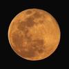 花見と月見と隕石と。