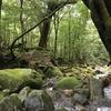 癒しの森あるき、始めました