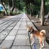毎日散歩は12キロ!( ̄▽ ̄;)
