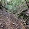 ナガモッコク尾根から赤子谷西尾根のハイキング(その5)赤子谷右俣後半