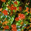 梅雨の晴れ間に 馬見丘陵公園の花たち その3