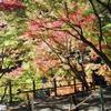 子供といっしょ〜秋の高尾山「もみじまつり」は原宿なみに大混雑!?