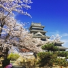 Matsumoto Castle - Best places to see cherry blossoms(SAKURA) in Matsumoto Nagano, Japan