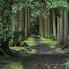 伊豆大島の旅『 波知加麻神社 』の素敵な参道