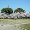 桜爆発、お腹いっぱい~
