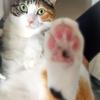 【愛猫日記】毎日アンヌさん#101