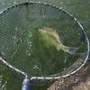 釣り部活動について