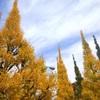 【神宮外苑】紅葉全国人気ランキングで1位・2位にあがる、イチョウ並木を見てきた【おさんぽ+ランチ】