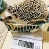 今週の体重測定2