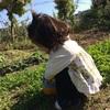完全放置で勝手に育ってくれた唐芋(サツマイモ)を収穫しました