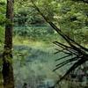 【夢日記】心地よい水を泳ぐ夢