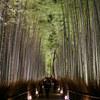「竹林の小径」のライトアップ
