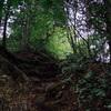 檜原村 千足から大岳山へ:久々に山を歩いたけど真夏の奥多摩は暑すぎた……