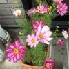花が大きくなってるような^ ^
