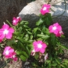 花の名前を教えてくれるアプリ「GreenSnap」