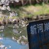 【1日写真】川越 氷川神社裏の新河岸川の桜 EOS6Dで撮影