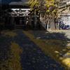 参道が銀杏の落ち葉に覆われた被官稲荷社(浅草神社境内社)