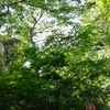 鎌倉のコモレビ