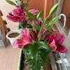 玄関に来客のあり百合の花(あ)