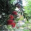 我が家の庭に咲いたお花を紹介します♪(5月末)