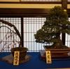 【大阪天満宮】梅まつり「盆梅と刀剣展」と近くのおすすめコロッケ屋さん