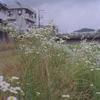 Photo No.364 / 咲き乱れる