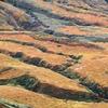 草紅葉の千畳ヶ原
