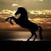 グラスワンダー|最低限のスタミナで有馬記念を突破、Aランクを出せるのか?