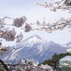 観音寺川の桜並木まで車中泊ドライブ