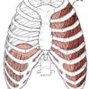 「呼吸リハビリ」 ヨガで病気予防 そして楽な終末期