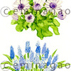 花の水彩イラスト