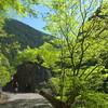 新緑の奥多摩(川苔谷から川苔山)