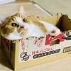 【猫学】寒い季節は特にご注意!猫のお風呂場での事故について。