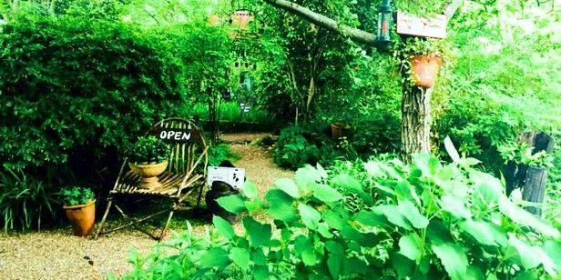 極上の癒しスポット!森の中の可愛いカフェ5選
