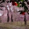 京都の梅を見るなら伏見区【城南宮】がおすすめ