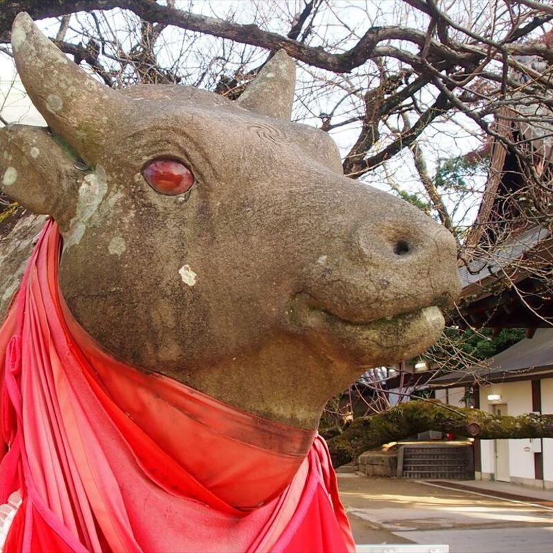 【北野天満宮】2021年は丑年!多数の牛が鎮座する神社への初詣はいかが?