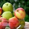 赤いリンゴと黄色いリンゴ! 色の違いはなに?