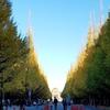 都内の紅葉スポット 神宮外苑イチョウ並木レポ