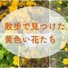 土手や散歩道で見つけた黄色い花たち。(追記あり)