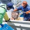 2017年8月1月 こぎ刺し漁