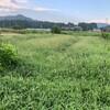 Tomの朝仕事 -畑の草刈りその2-