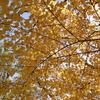 今週のお題「紅葉」 私の大好きな居場所『阿蘇小国くじゅうの紅葉巡り』と食欲の秋!!