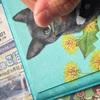 黒猫めるちゃんボードを描く5