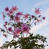 僕らは愛の花を咲かそうよ♡  ~中の島バラ園~