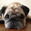 【我が家は12歳】シニア期は大きく3段階。「犬年齢」を知ろう